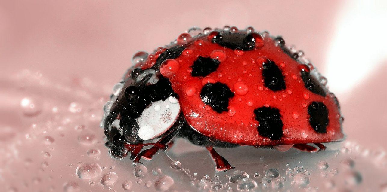 Ladybug Wellness