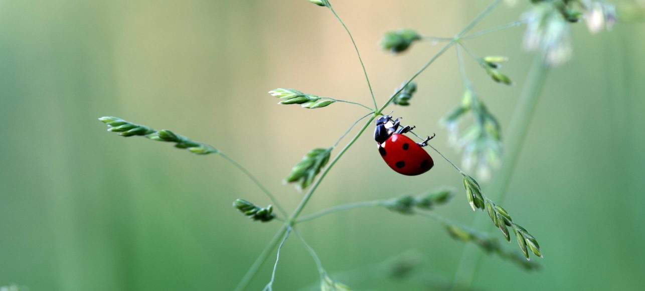 Court Of Atonement Ladybug Wellness